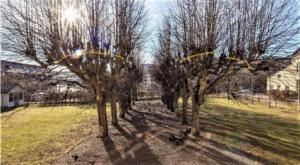 Bild som visar vart på träden där det ska beskäras